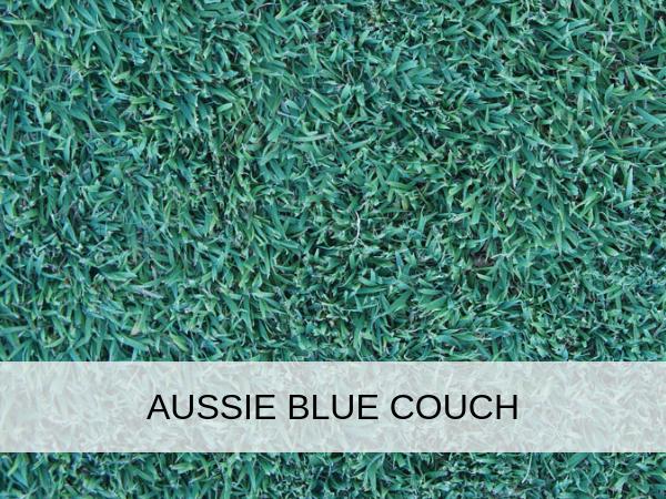 Aussie Blue Couch Redlands Turf And Landscape Supplies